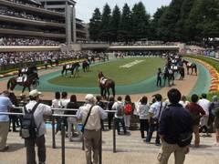 東京競馬場付近の子連れに優しいスポット10選。