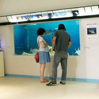 すみえファミリー水族館 の写真 (3)