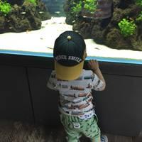 Suzuki Yusukeさんが撮った すみだ水族館 の写真