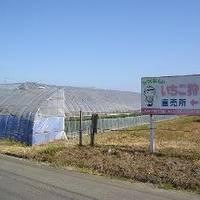 JAみやぎ亘理 吉田観光いちご園