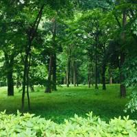 井の頭恩賜公園 (井の頭公園)