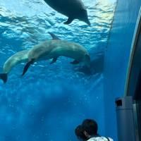 かなさんが撮った 横浜・八景島シーパラダイス の写真