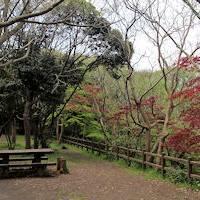 鎌倉市子ども自然ふれあいの森 の写真 (2)
