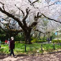小金井公園 の写真 (2)