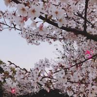 雁宿公園 (かりやどこうえん)