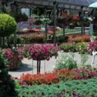手柄山温室植物園 の写真 (3)