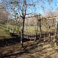 駒門公園 (こまかどこうえん) の写真 (2)