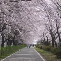加治川治水記念公園 (かじがわちすいきねんこうえん) の写真 (2)