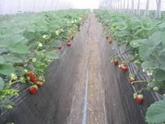 果物狩りができる関東の農園35選。時期別に狩れるフルーツは?