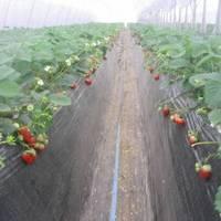 フラワーガーデン イイジマ農園