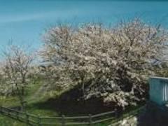 加治川治水記念公園 (かじがわちすいきねんこうえん)