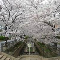 呑川緑道・呑川親水公園(のみかわ) の写真 (2)