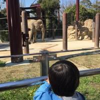 pinojpさんが撮った 東京都恩賜上野動物園 の写真