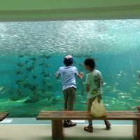 姫路市立水族館 の写真 (2)