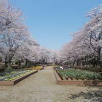 城山公園(しろやまこうえん) の写真 (2)