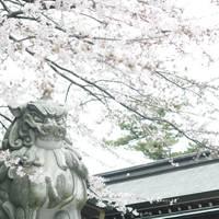 寒川神社 の写真 (3)