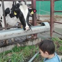 加藤牧場の手づくりアイス バッフィ (かとうぼくじょう)