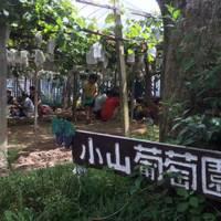 小山観光葡萄園 の写真 (2)