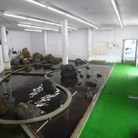 なぎさ水族館 の写真 (3)