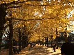 自然を体験できる東京の遊び場10選。子どもと外で遊ぼう!
