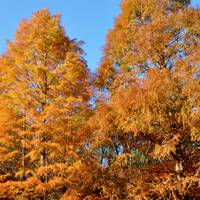 北山緑化植物園 の写真 (2)