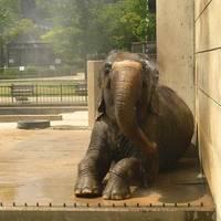 岡崎市東公園動物園 の写真 (3)