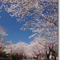 母智丘公園(もちおこうえん)