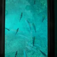 ブセナ海中公園 の写真 (2)