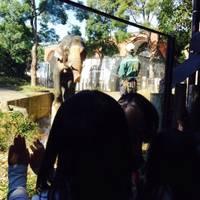 よこはま動物園ズーラシア の写真 (2)