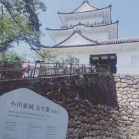 stereotypeさんが撮った 小田原城址公園 の写真