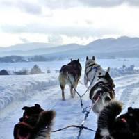 ムーンライトレディース 北海道・旭川近郊 犬ぞり