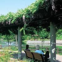 貝ヶ森中央公園  ( かいがもりちゅうおうこうえん)