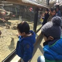 Kensuke  Saitoさんが撮った よこはま動物園ズーラシア の写真