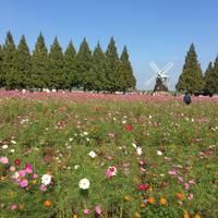 あけぼの山農業公園 の写真 (2)