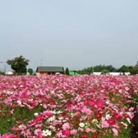 和泉リサイクル環境公園 の写真 (2)