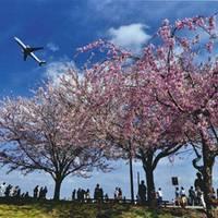 成田市さくらの山公園 の写真 (1)