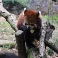 東京都多摩動物公園 の写真 (2)