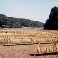 寺家ふるさと村 の写真 (2)