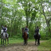 MIKIホーストレック 三木 ホーストレッキング(乗馬) の写真 (3)