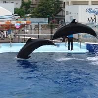 越前松島水族館 の写真 (2)