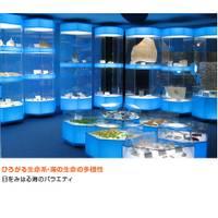 奥出雲多根自然博物館(おくいずもたねしぜんはくぶつかん) の写真 (3)
