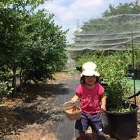 ガーデンレストラン風舎 ブルーベリー園 の写真 (2)