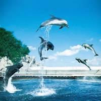 つくみイルカ島 の写真 (2)