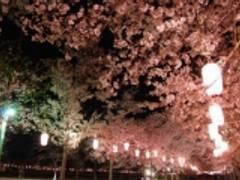 桜が見られる鹿児島のおすすめ公園7選!お花見を満喫