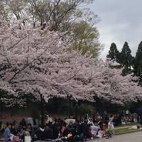 梅小路公園 の写真 (2)