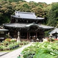 三室戸寺 (みむろとじ)