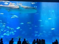 全国の子連れで楽しめる有名水族館おすすめ10選!