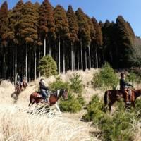 サウスヒル牧場 霧島ホーストレッキング(乗馬) の写真 (2)