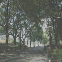 大分市 平和市民公園