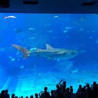 kiyotokiwさんが撮った 沖縄美ら海水族館 の写真